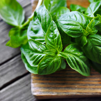 Basil is a natural mosquito repellant; plant it in your gardens or around your home to keep mosquitoes and houseflies away.