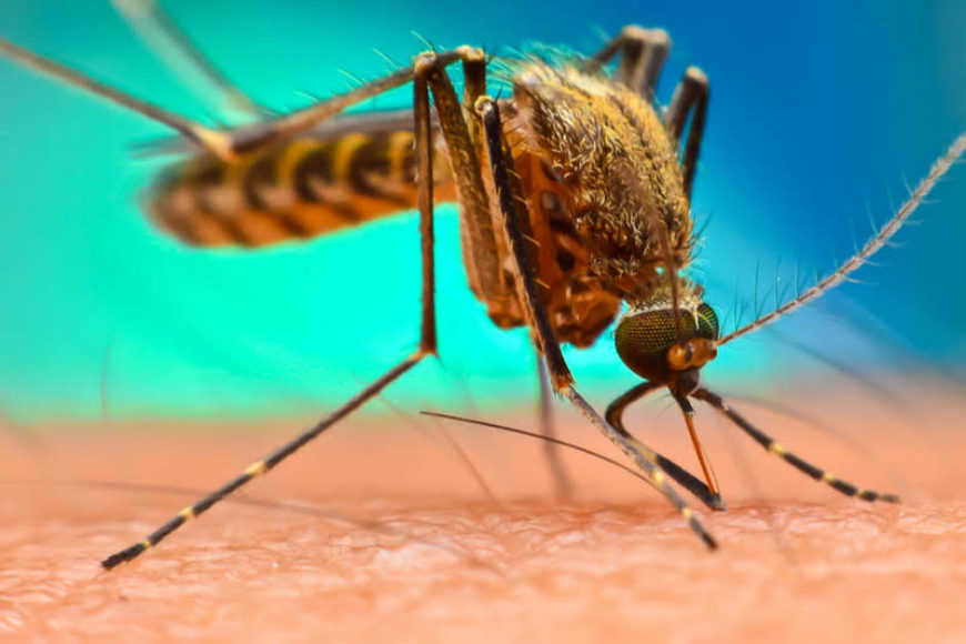 Mosquito Borne Diseases in Texas