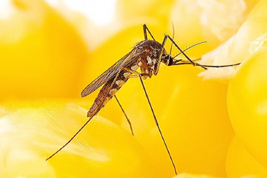 Spring Mosquito Preparation: Getting Ready for the Mosquito Invasion
