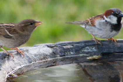 How To Keep Your Bird Baths and Win The War on Mosquitoes