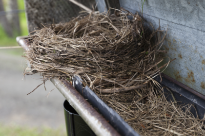 What's In My Gutters: Texas Pests That Can Clog Your Gutters