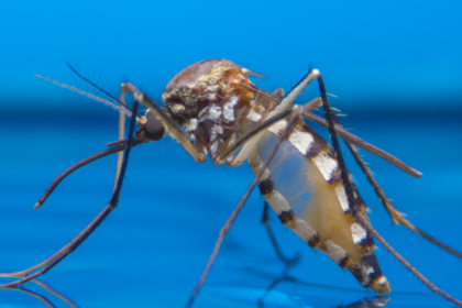 Fascinating Facts About Mosquitoes